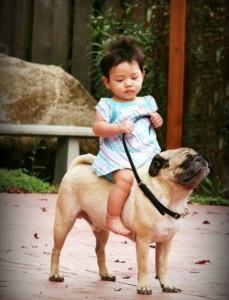 pug-horse